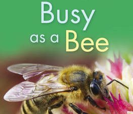KINGFISHER READERS: BUSY AS A BEE (LEVEL