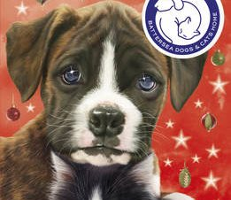 BATTERSEA DOGS & CATS HOME: JAZZ AND BO